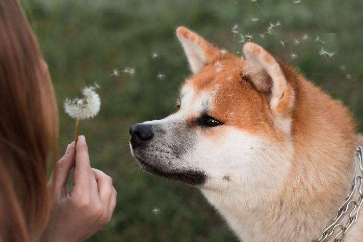 Il cane e le forme allergiche