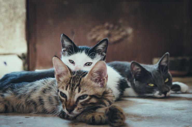 I gatti e le loro malattie