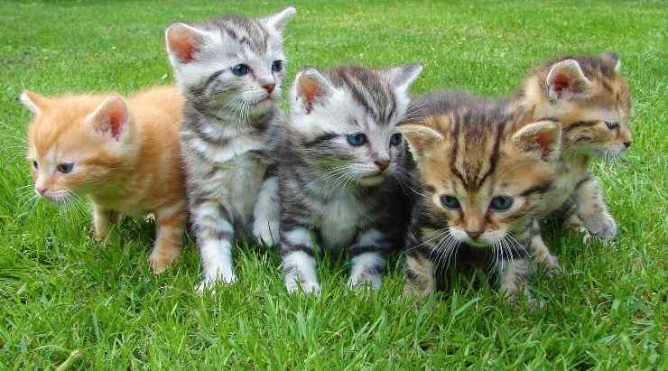 Gatti e la bellezza