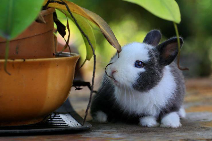 Il coniglio e il suo comportamento