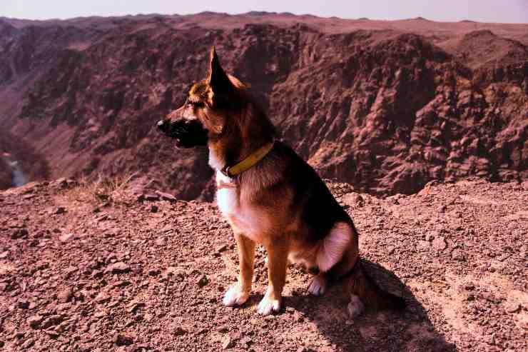 Il cane e i sassi