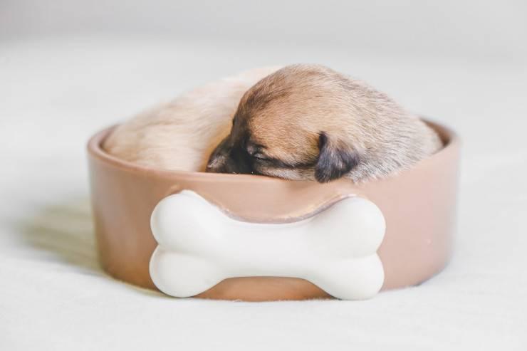 La stanchezza del cane