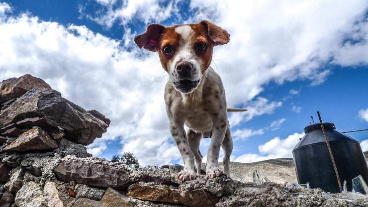 Le pietre e il cane