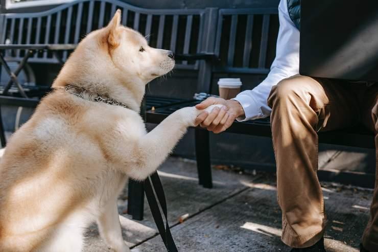 Il cane ama il padrone