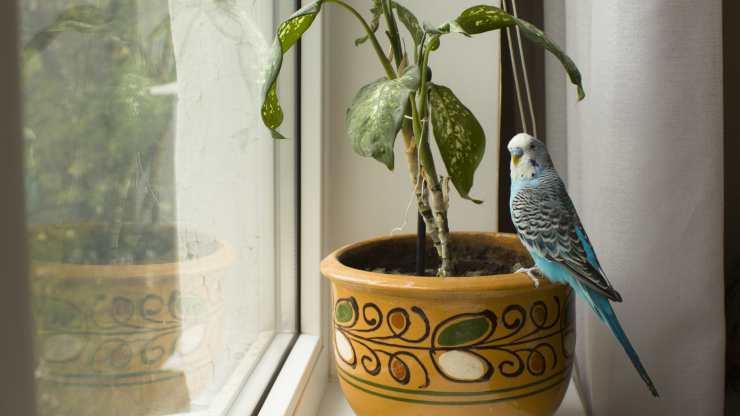 piante tossiche per gli uccelli