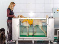 poliradicoloneurite acuta nel cane