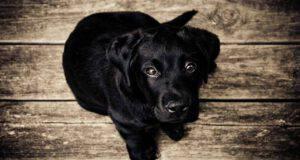 Cucciolo in primo piano (Foto Pixabay)