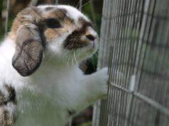 Il coniglio e la gabbia