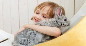 Al coniglio non piacciono i bambini