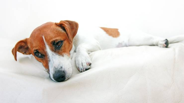 sintomi avvelenamento cane