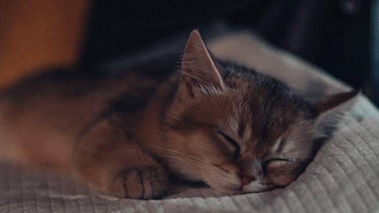 sintomi coriza del gatto