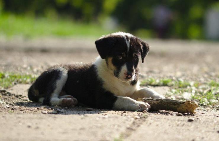 cagnolino scappa proprietario due settimane