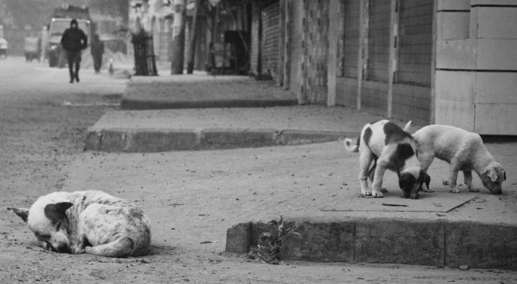 Cani randagi per strada (Foto Pixabay)