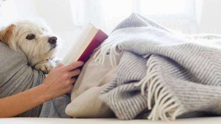 studiare con il cane riduce lo stress