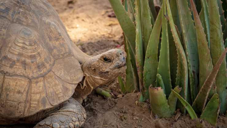 terrario per tartaruga