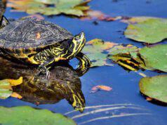 Vitamina A nella tartaruga