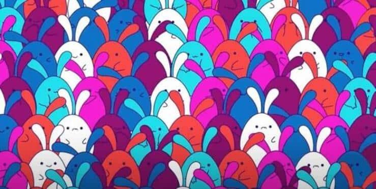 test visivo dei coniglietti