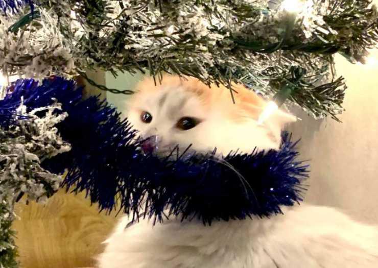 gattino triste non trova albero Natale