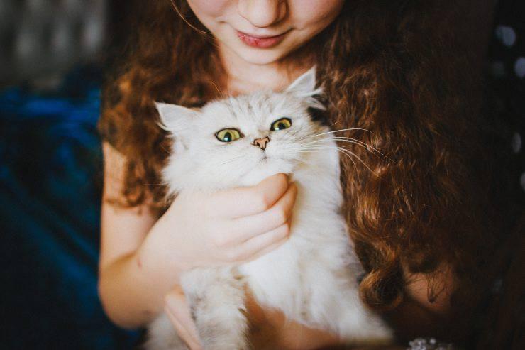 Il gatto con il bambino