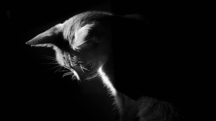Il gatto ha paura del buio