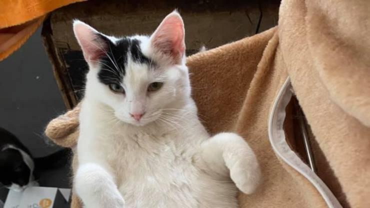Gatto in posa (Foto Facebook)