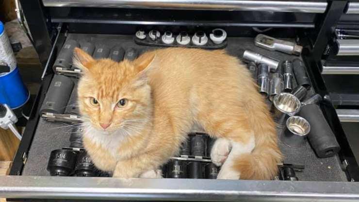 Il gatto in posa (Foto Facebook)