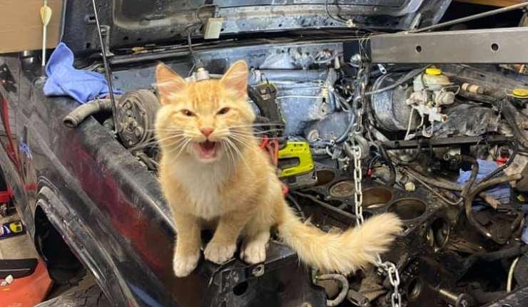 La gatta in officina (foto Facebook)
