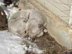 cane rannicchiato freddo neve