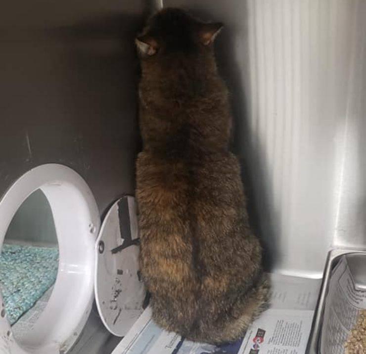 gatto angolo morte proprietario