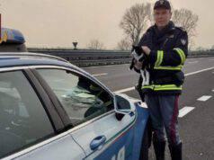 gatto ferito guardrail autostrada