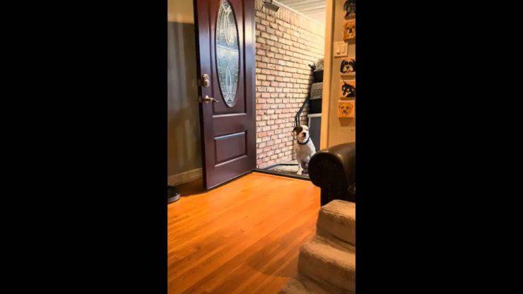 cane randagio entrare casa