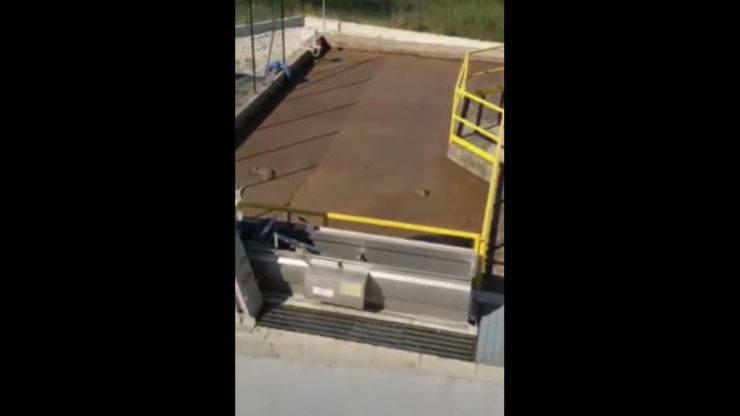 Il cane finito nel depuratore cerca di nuotare tra i liquami (Screenshot Video)