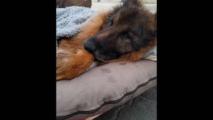cane paralizzato mare ultima volta