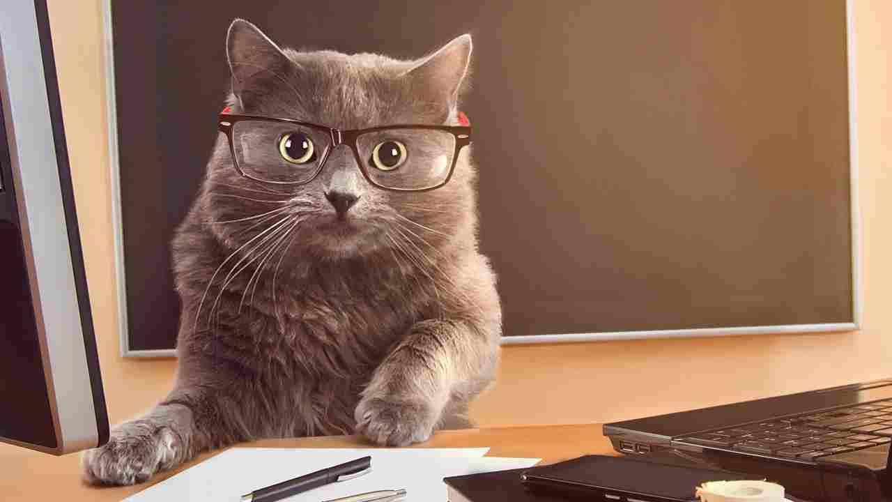 Documenti del gatto