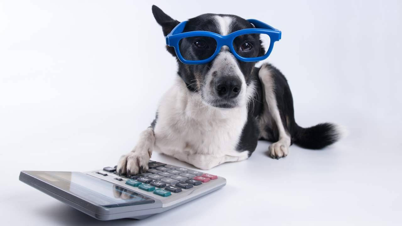 Quali spese veterinarie sono detraibili?