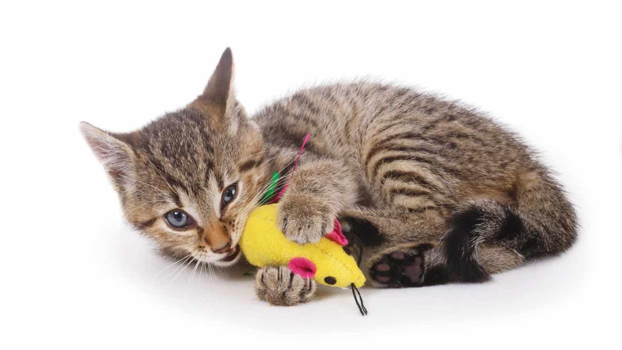 Giochi da masticare per il gatto