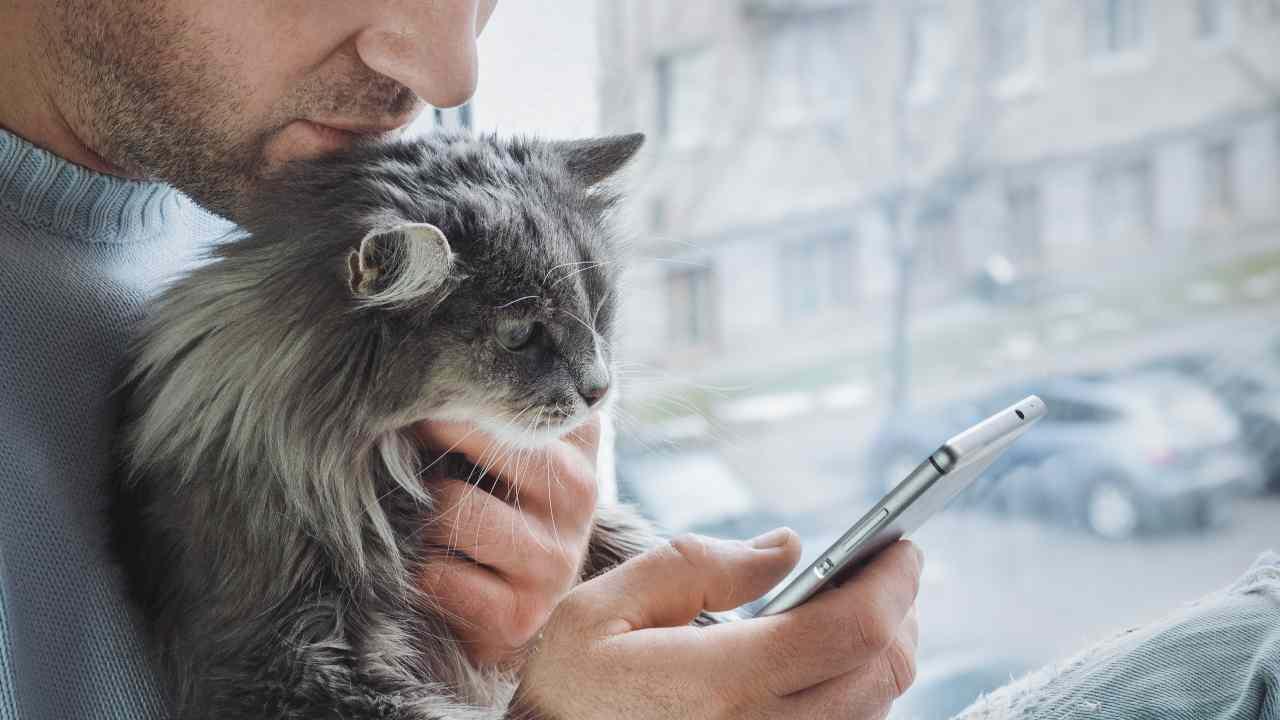 Come trasformare il tuo gatto in un influencer su Instagram
