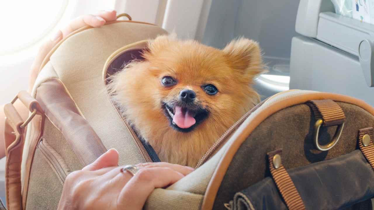 Trasportino fai da te per cani