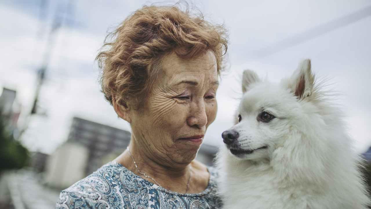 Il cane nella cultura giapponese
