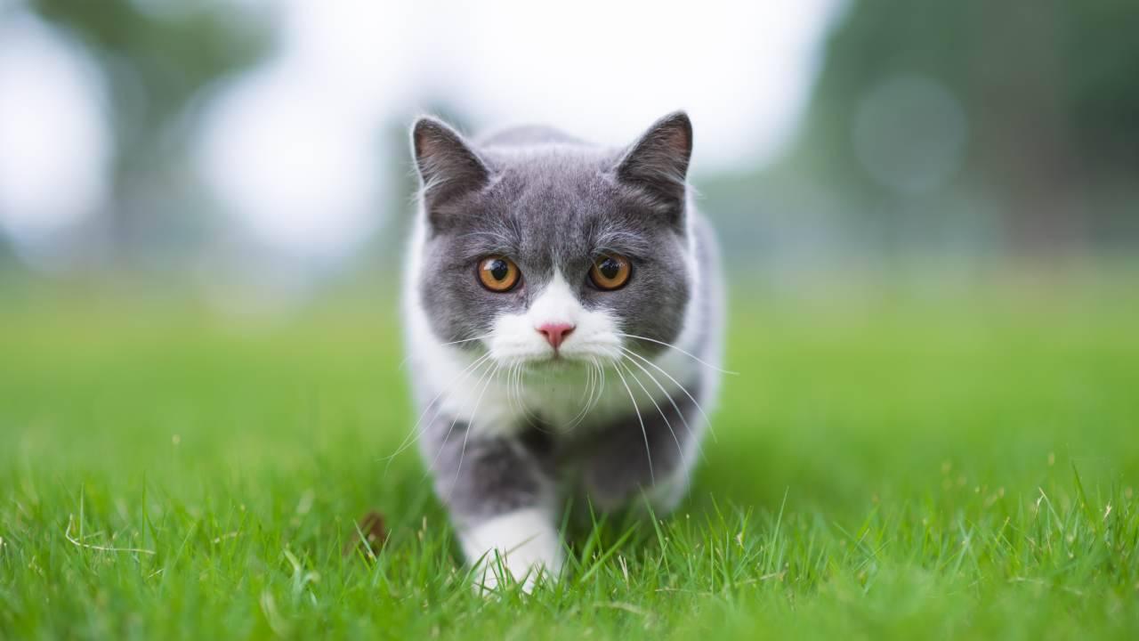 La legge prevede la figura del gatto di quartiere?