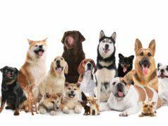 Quante razze di cani esistono al mondo?
