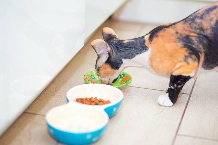 Riscaldare il cibo del gatto