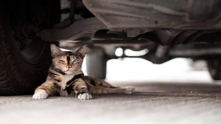 Gattini nelle marmitte