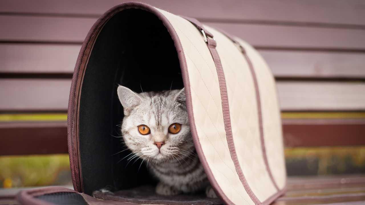 Trasportino fai da te per gatti
