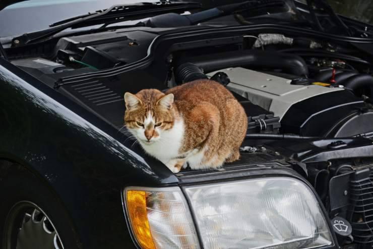 Gattini nelle marmitte e sulle auto