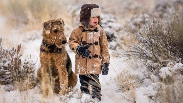 Airedale Terrier con i bambini