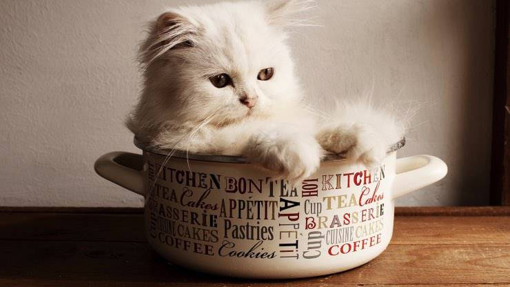 Usare ammoniaca con gatto in casa