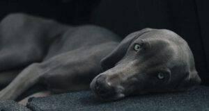 Avvelenamento da mercurio nel cane