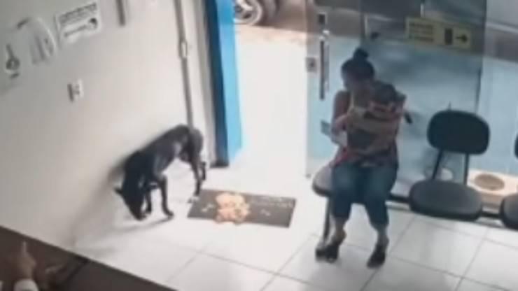 Cane ferito (foto video)