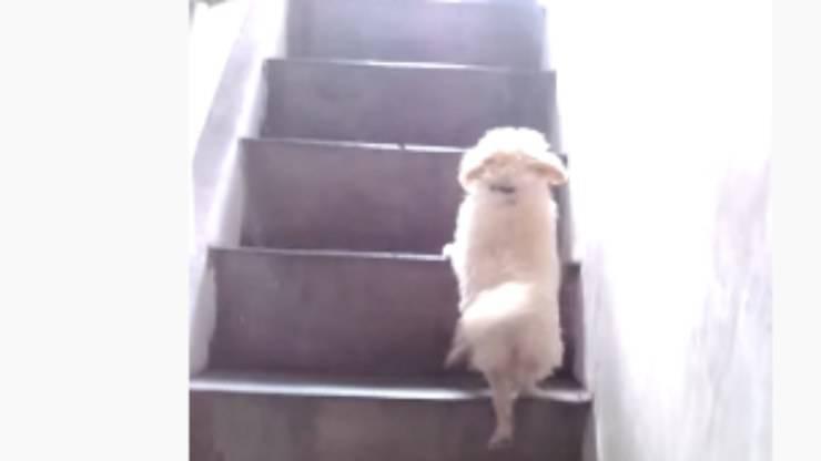 Il cane sulla scalinata (Foto video)